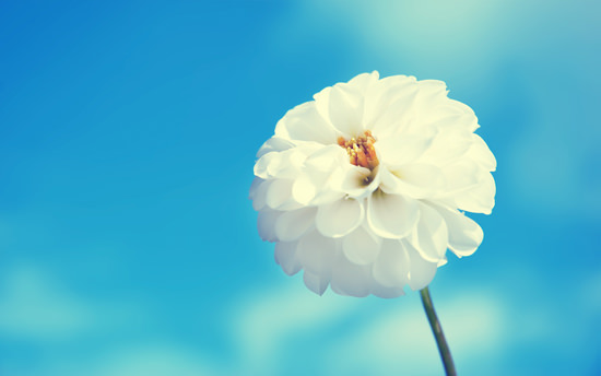 White flower for unforgiveness post